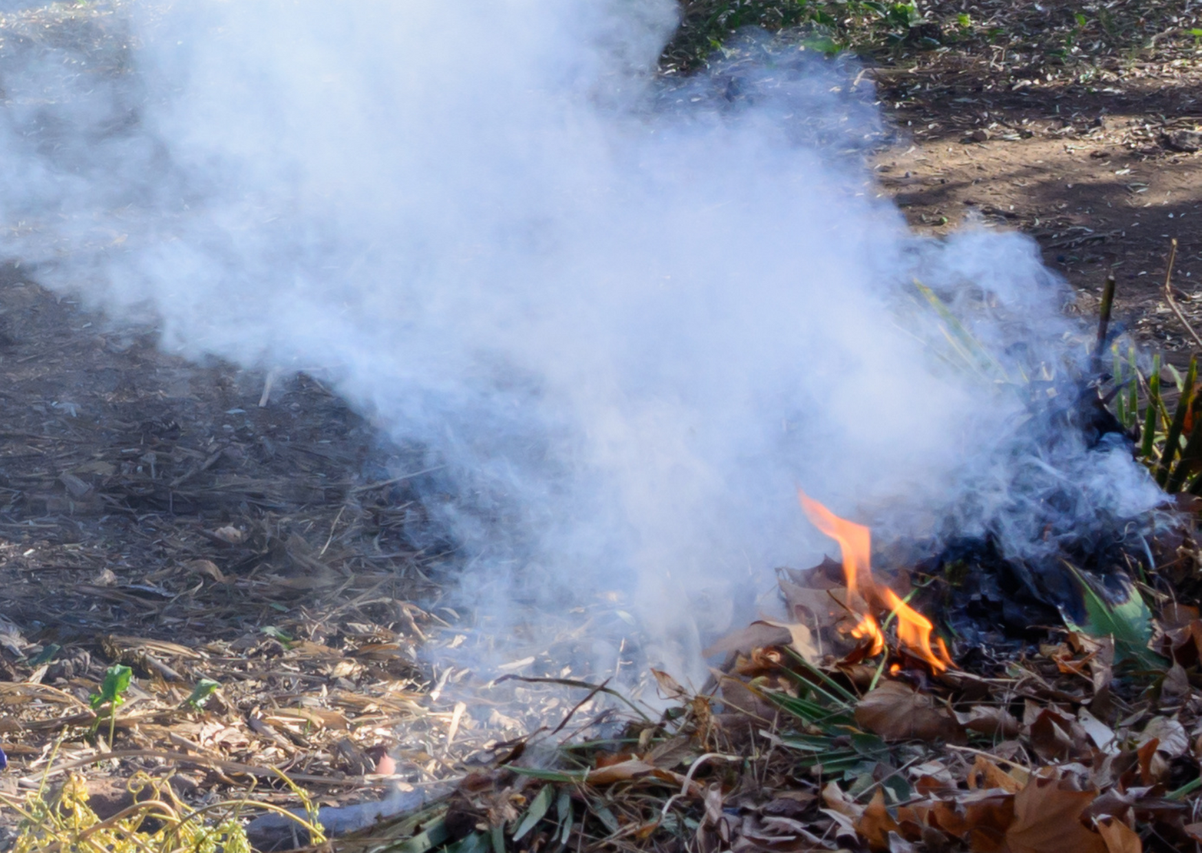 Fire + Sage of How to Repel Mosquitoes Without Bug Spray