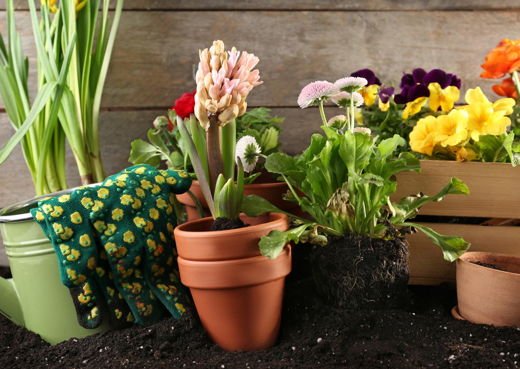 Plants in pot using soil
