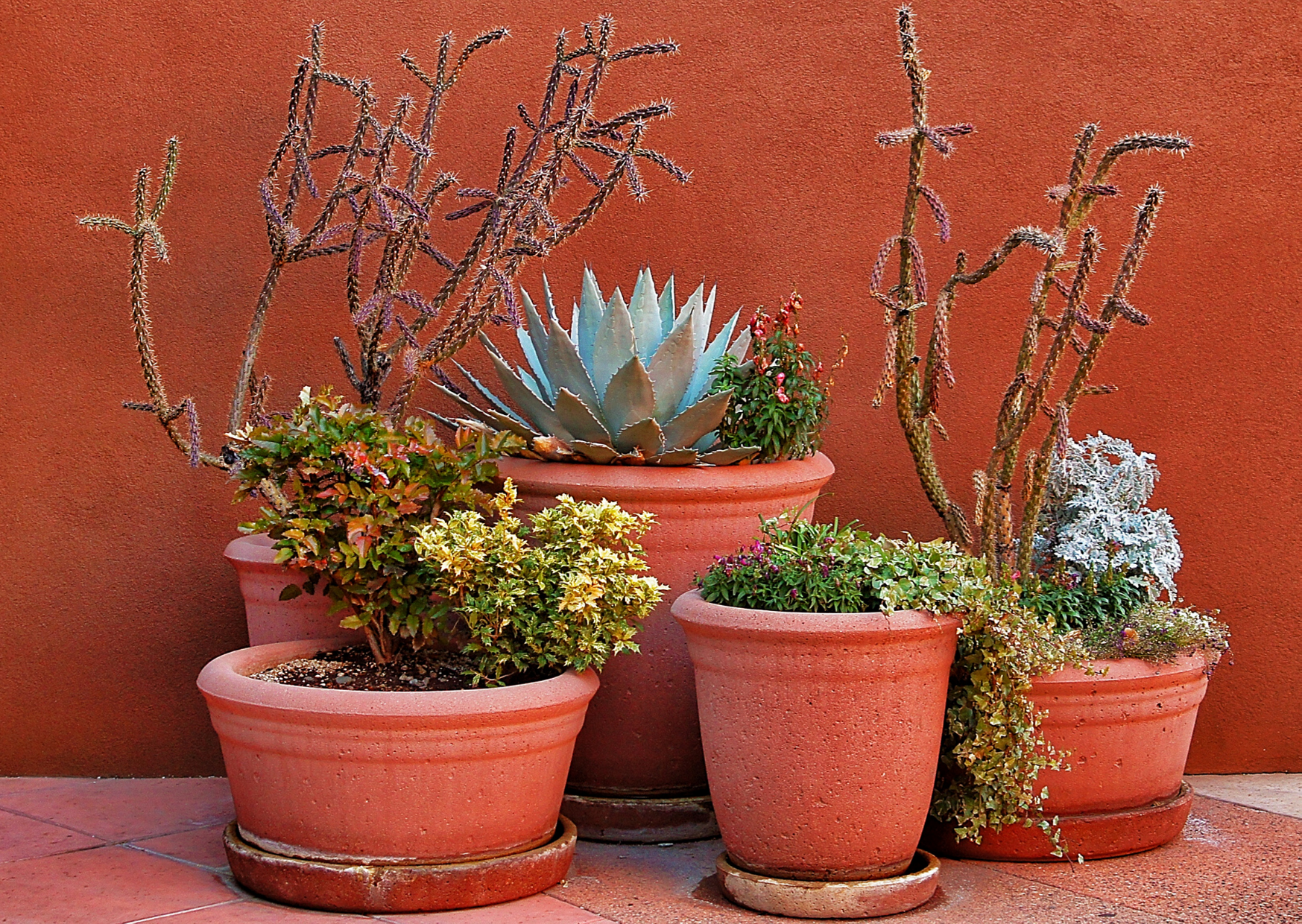 diffent kinds of potted plants