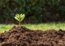 How To Soften Hard Garden Soil