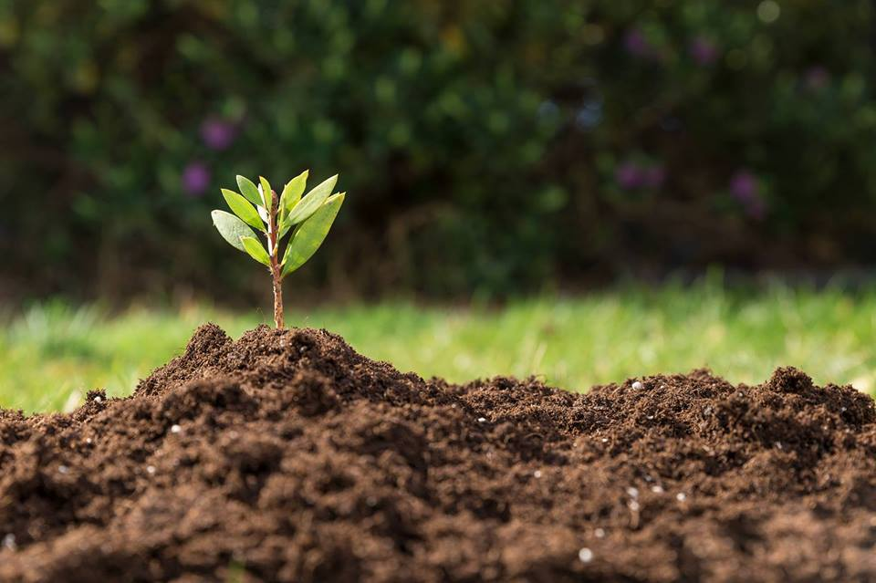 Photo of soil and plant