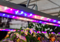The Best Grow Light for Flowering Plants
