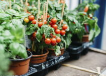 The Best Soil for Container Gardening Tomatoes
