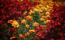 Photo of fall flowers