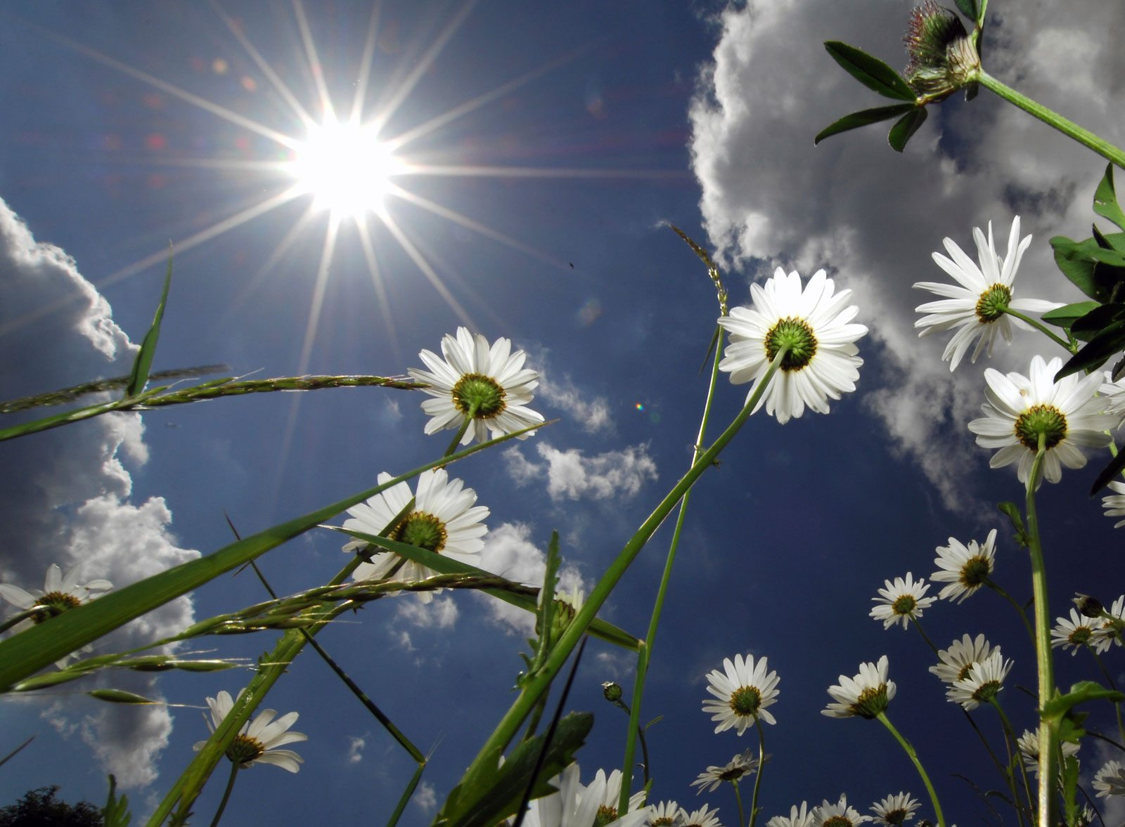 Photo of flowers have better sun spot