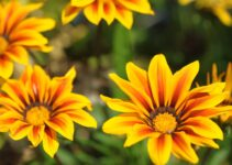 How To Grow Flowers Faster (Like A Pro)
