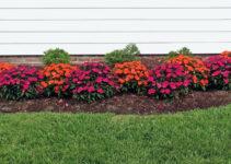 Will Flowers Grow Through Mulch?