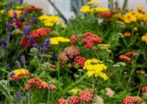 How to Use Plant Hardiness Zones