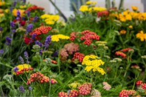Photo of Hardiness zone flowers
