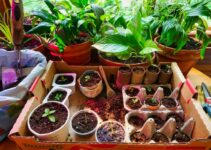 How to Grow Flowers from Seeds Indoors
