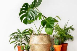 Photo of different plants