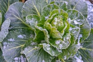 What is a Frost Date?