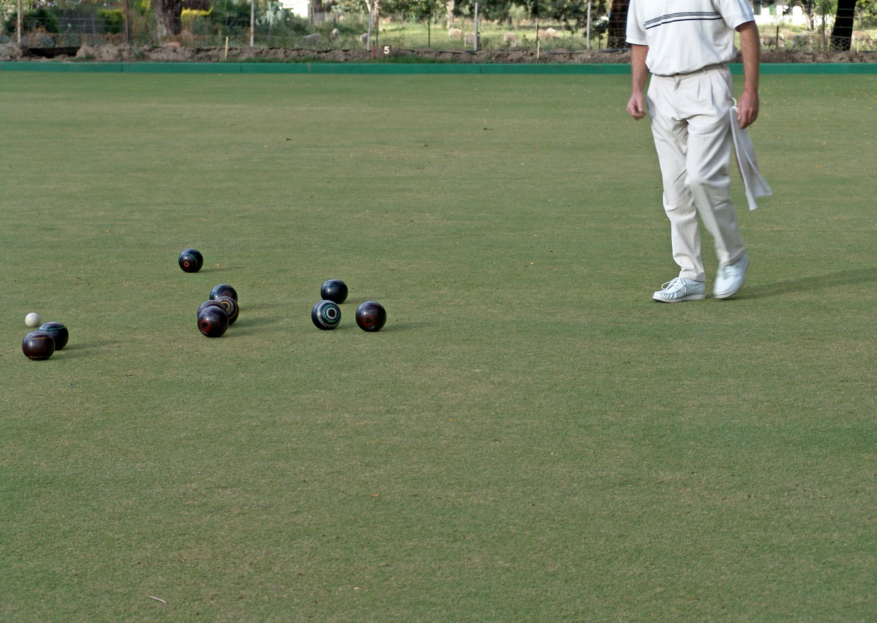 Scroungers lawn bowls