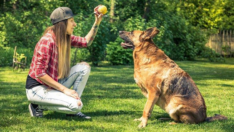 Teaching A Dog A New Trick