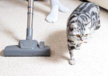 Best Stick Vacuum for Cat Litter